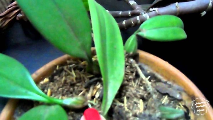 Tipos de orquídeas e cuidados básicos