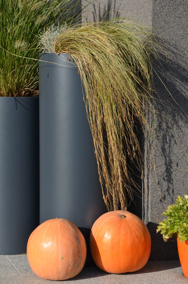 grass ornamental  pot modern garden malkul