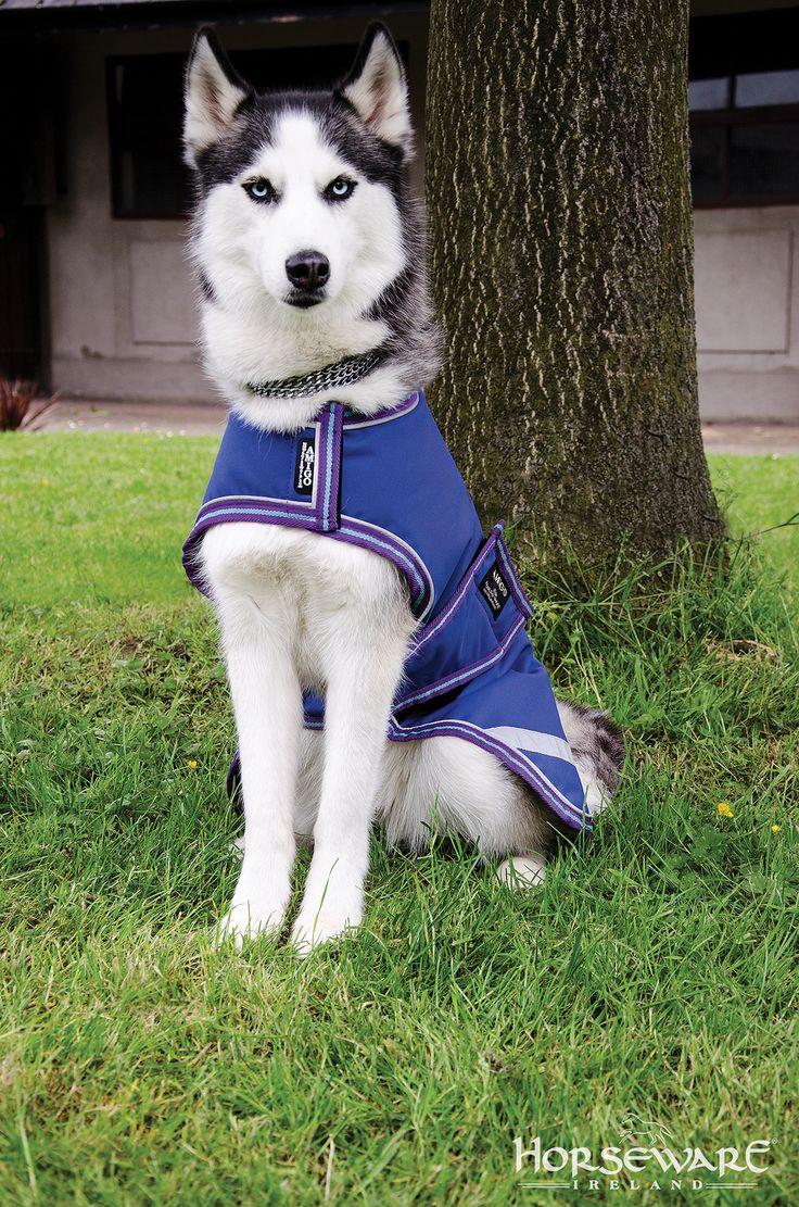 Horseware Amigo Waterproof Dog Rug