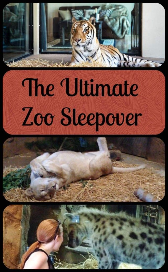 Jamala Wildlife Lodge at Canberra's National Zoo and Aquarium is the ultimate zoo sleepover, with luxury bungalows as part of the animal's enclosures.