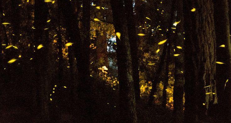 luciernagas en tlaxcala noche