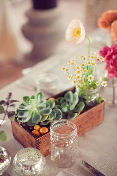 Succulents for the table