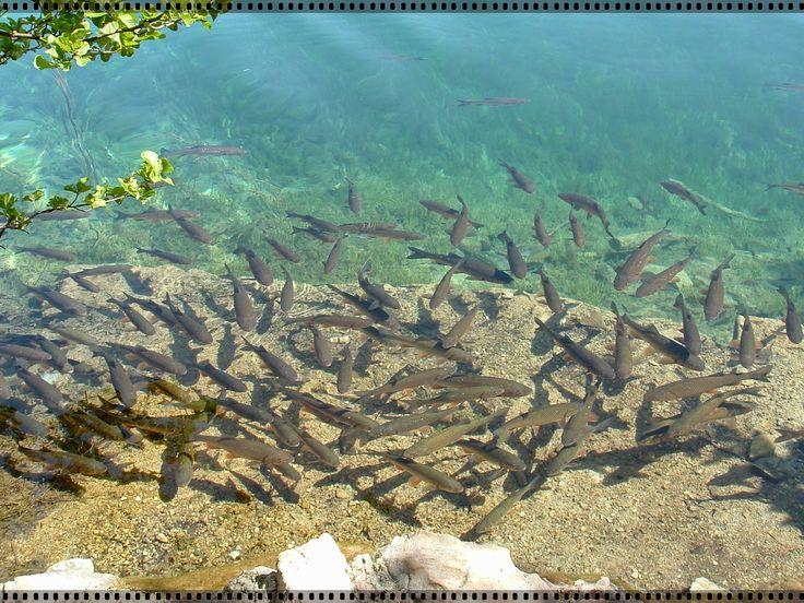 W świecie piękna natury: Chorwacja