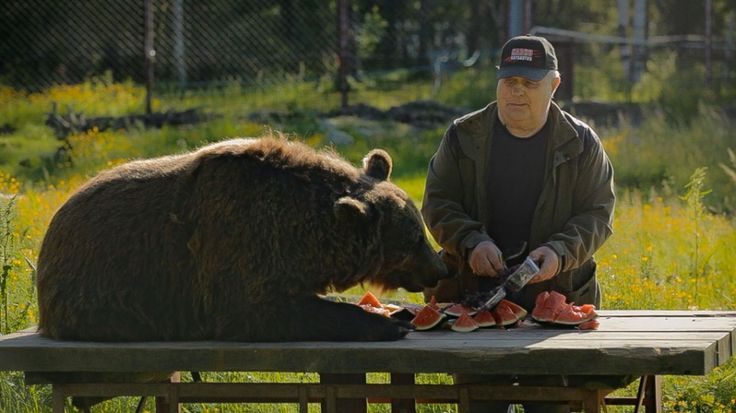 Meet Sulo – the Bearman from Kuusamo in Large Carnivores (pretador) Center  | VisitFinland.com I Watch the video!!