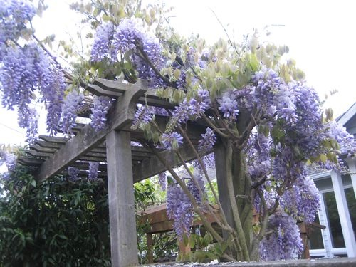 One of my all time favorites....wish they made Wisteria perfume