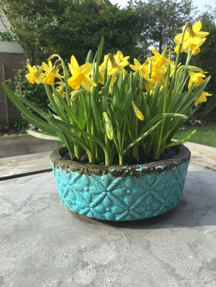 Voorjaar in een schaal