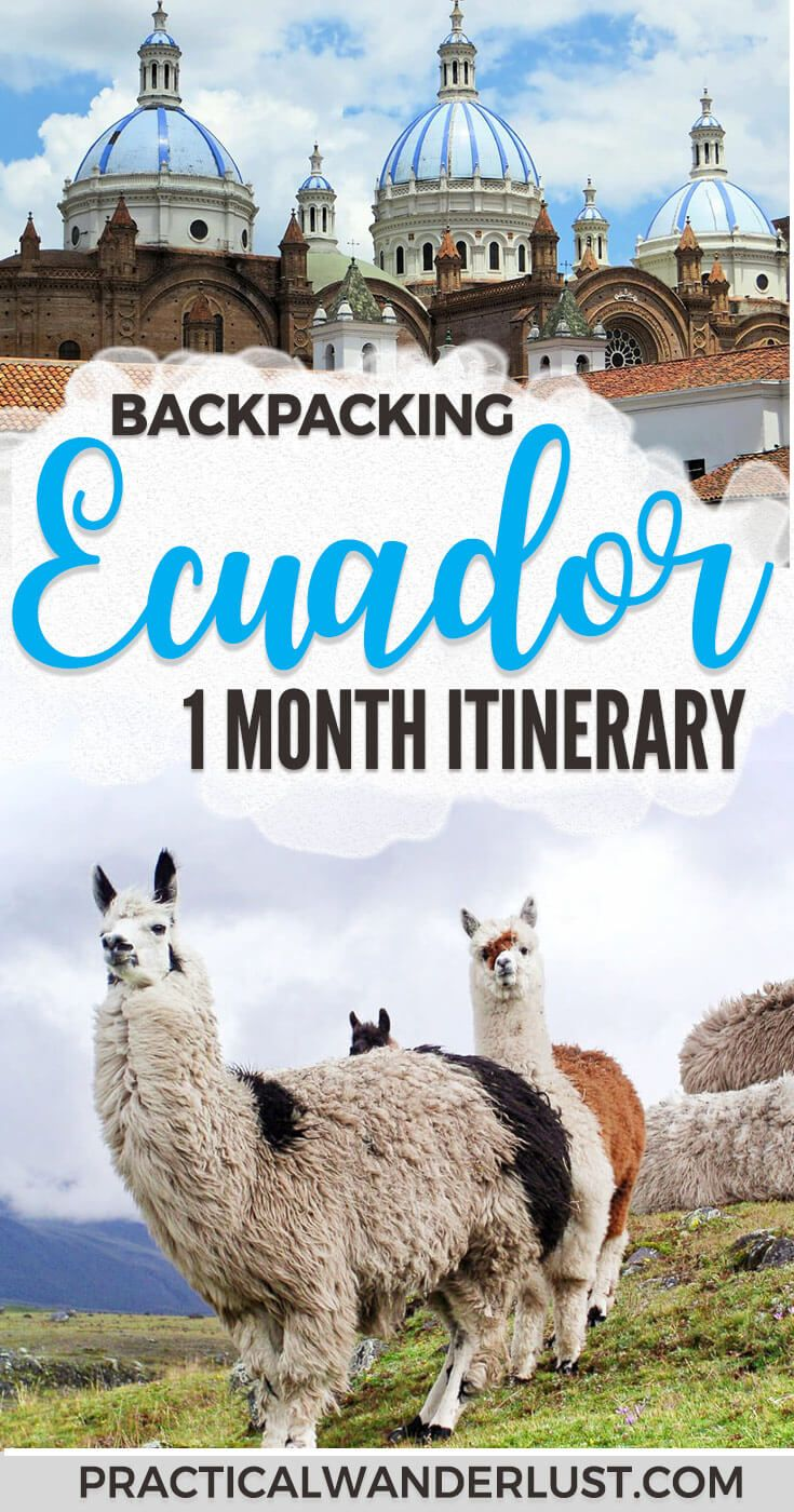 A detailed itinerary for 1 month of backpacking Ecuador! Visit Quito, the Galapagos, Banos, Cuenca, Vilcabamba, Cotopaxi, the Quilotoa Loop, Mindo, the Amazon, and more. #Ecuador is an amazing South America travel destination that should not be missed! #SouthAmericaTravel #llamas