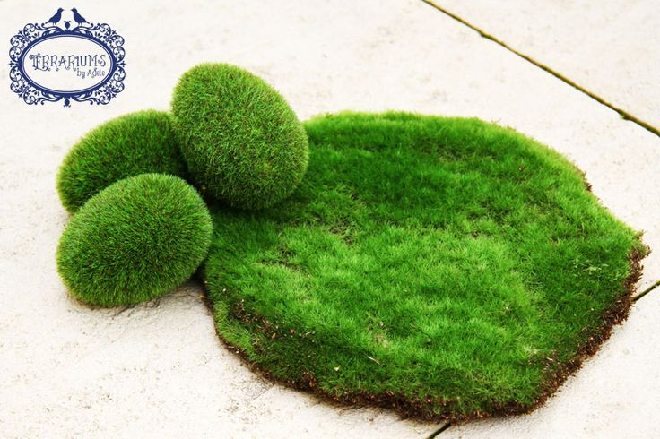 Fake moss mat and eggs for a terrarium. Follow Terrariums by Adele on Facebook.