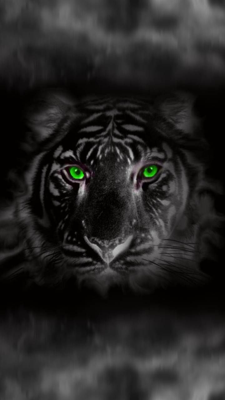 Download Tiger Black Wallpaper By Dathys 7b Free On Zedge Now Browse Millions Of Popular Black Wallpapers And Ringtones Tiger Wallpaper Tiger White Tiger