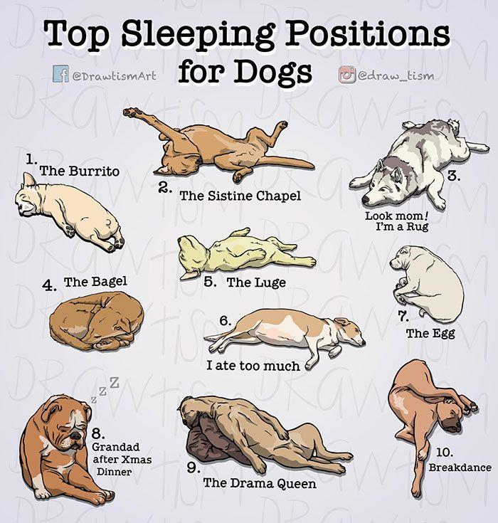 Comics Illustrations Drawtism Dog Sleeping Positions Sleeping Dogs Sleeping Positions