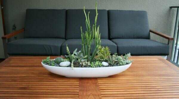 Succulent indoors