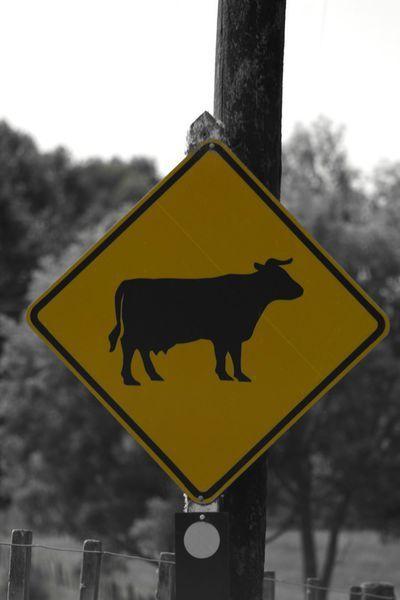 'Road sign in New Zealand' von stephiii bei artflakes.com als Poster oder Kunstdruck $15.68