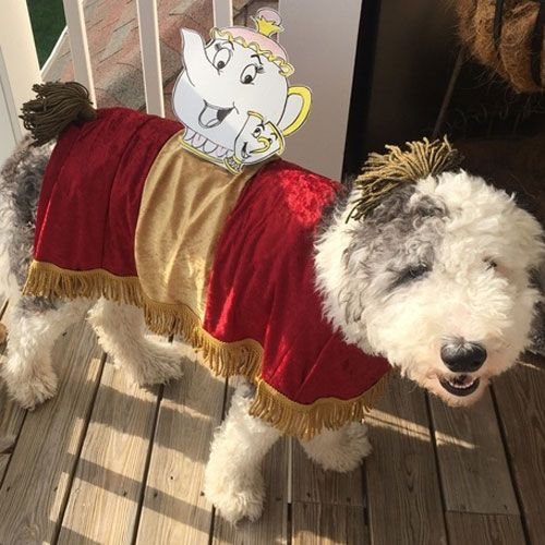 Epic Dog Halloween Costumes Ideas Dog Halloween Costumes