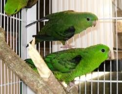 Aves Tropicales - PAJARERIA AMAZONAS
