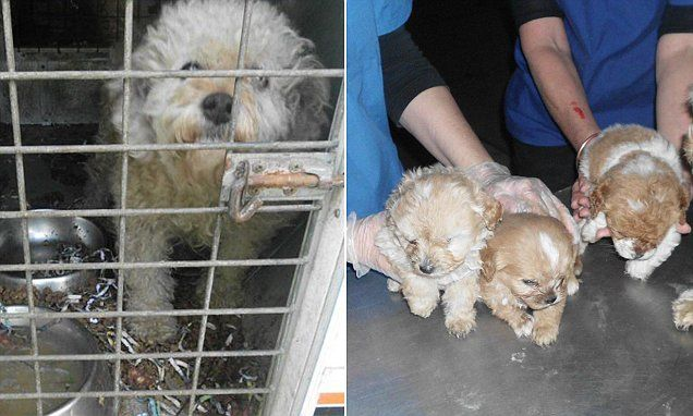 Dozens Of Dogs Rescued From Puppy Farm That Had No Running Water Rescue Dogs Puppies Dogs