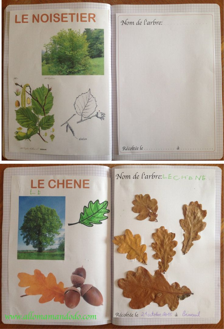diy vive la for t fabrique ton herbier activit carnet d 39 automne herbier for t et carnets. Black Bedroom Furniture Sets. Home Design Ideas