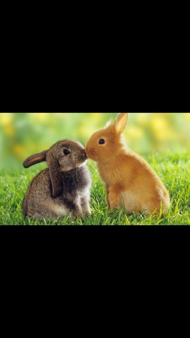 Estos conejitos son muy amigos y muy cariñosos, jijiji