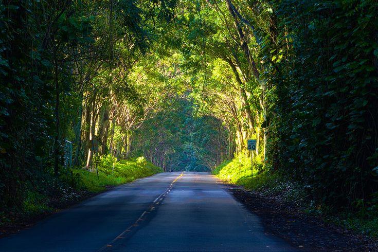 Tree Tunnel, Kauai Scapes - Rick Boots | Favorite Placez ...