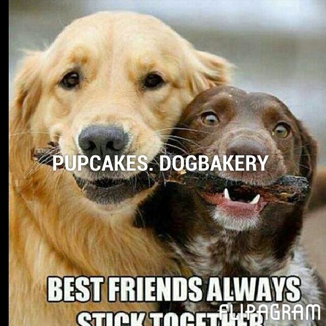 Flipagram - PUPCAKES. DOGBAKERY  - Music: DJ's Choice - Who Let the Dogs Out