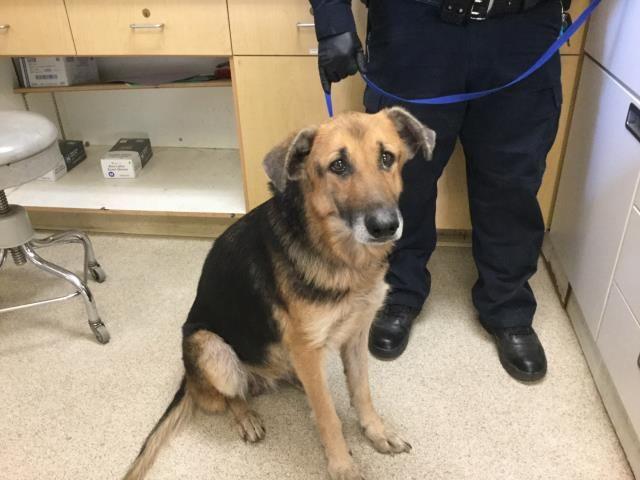 Www Petharbor Com Pet Rvsd4 A1486417 Cat Adoption Rescue Dogs Dogs