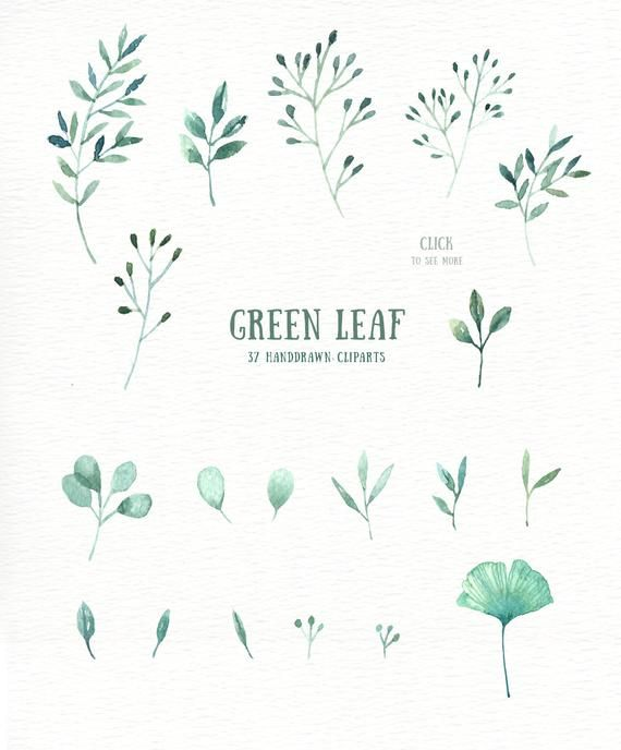 Green Leaf Watercolor Clipart Watercolor Flower Watercolour