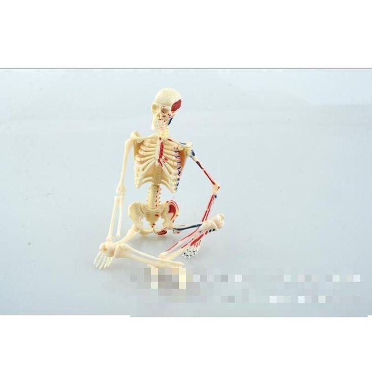 31.66$  Buy here  - Teaching Resources Human skeleton model, medical anatomical model medical teaching model Plastic Human Skeleton Model