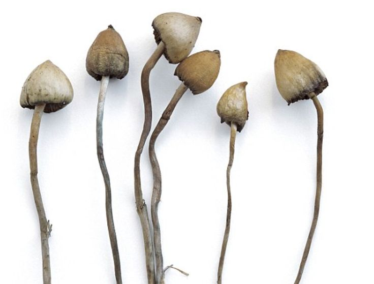Psilocybin, the active ingredient in magic mushrooms, proves to be an affective combatant against severe depression in a recent U.K.-based clinical trail.
