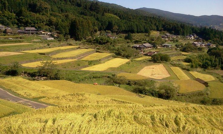 Sakaori rice terraces/坂折棚田 2011年9月24日撮影