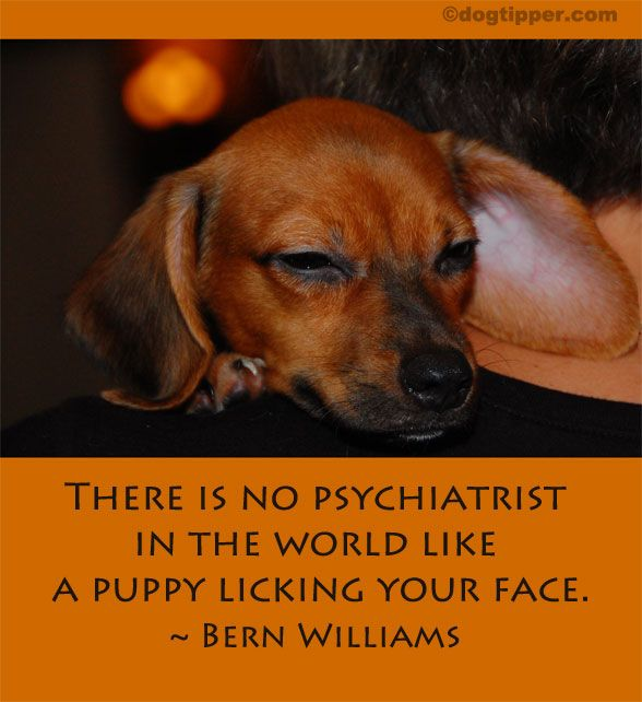 There is no psychiatrist in the world like a puppy licking your race. By Bern Williams http://www.dogtipper.com/dog-of-day/2012/03/famous-dog-quote-bern-williams.html