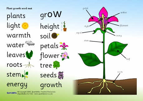 Plant growth word mat