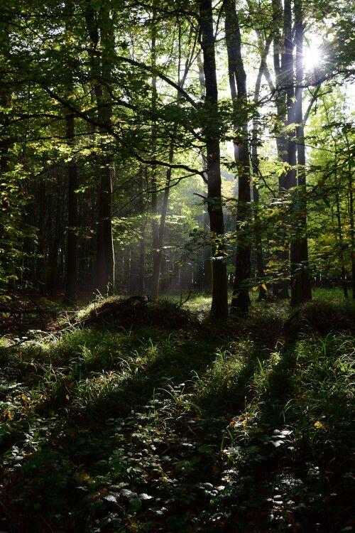 Slunce v lesích