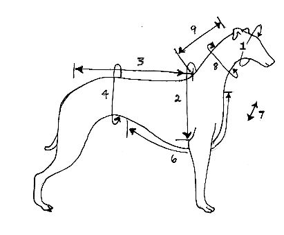 9 Measurements for a perfect fitting dog coat