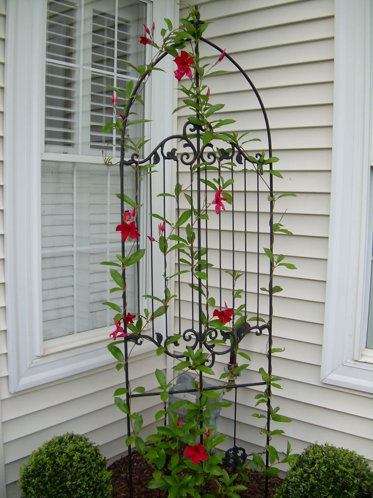 15 best garden trellis ideas images on pinterest trellis for Trellis design ideas