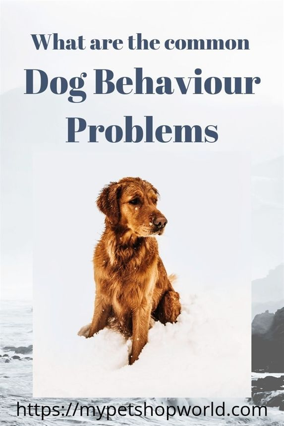 Dog Training In 10 Minutes Dog Training Nj Garmin Pro 70 Dog