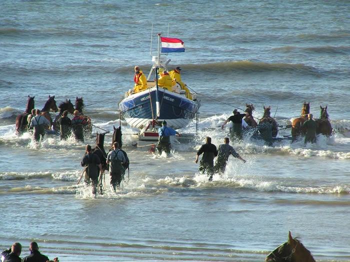 Ameland, de reddingsboot.  Notice Friesdan horses being used in the rescue.
