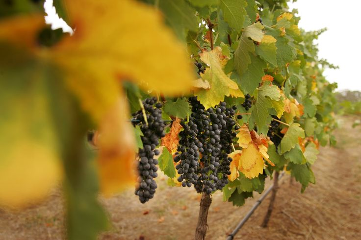 De Bortoli Hunter Valley Vineyards. http://www.debortoli.com.au/home.html