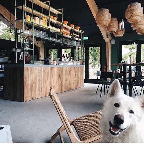 Leuke foto gespot met de ushuaia lounge stoel met rotan, woef! Bij interesse mail naar ibizaoutdoor@gmail.com ook voor een afspraak in de loods. #interieur #decoratie #inrichting #loungestoel #lounge #restaurant