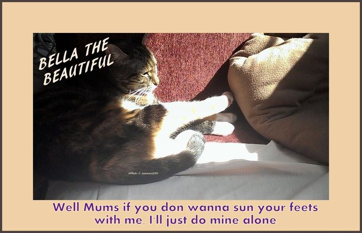 Bella The Beautiful loves to sun her feet & she likes company. What little rabbits does your #cat have? #AnimalLover