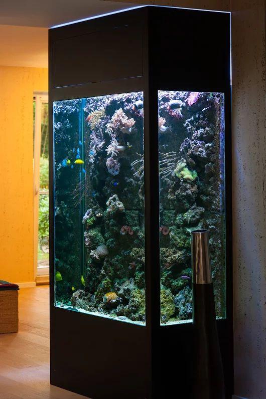 meerwasseraquarium einrichten meerwasseraquarium einrichten tipps meerwasser. Black Bedroom Furniture Sets. Home Design Ideas