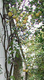 """""""1960年始めのギリシアのクレタ島や南イタリアの伝統的な食事法をさして、定義/宗教や文化の違いがあるために、地中海式ダイエットにはさまざまなバリエーション"""" 地中海式ダイエットと健康 http://wellness-sasaki.jp/med.diet/about/top.html"""