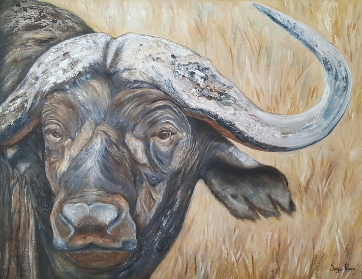 Buffalo - Oils on canvas 24 x 35 inches - R3500