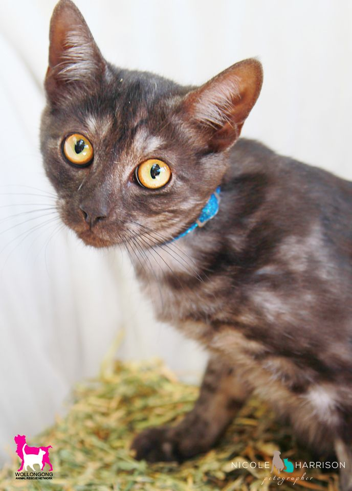 Max is such a sweetie and in need of a loving home. For more info... http://www.petrescue.com.au/listings/289302