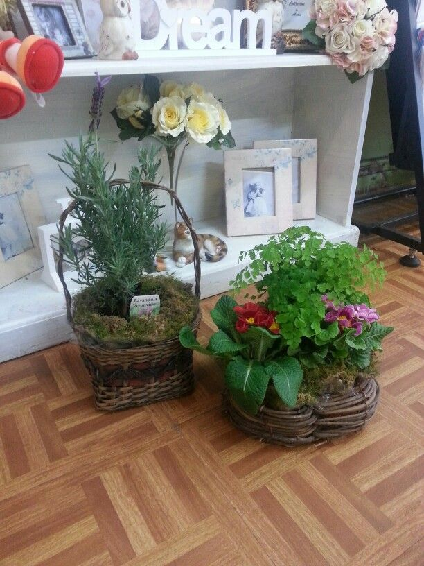Plant arrangements and plant baskets.. the perfect long-lasting small gift