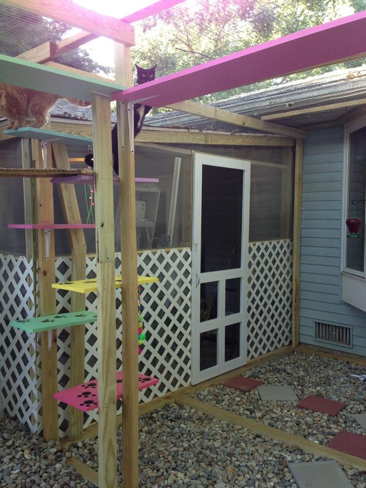 Best Catio Images On Pinterest Kittens Cat Stuff And Cat Houses