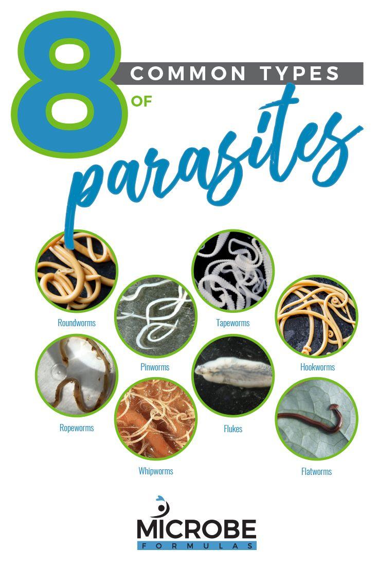 pinworms okozza