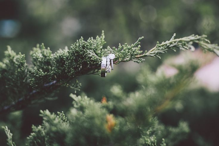 Nature/bouquet and wedding ring shot