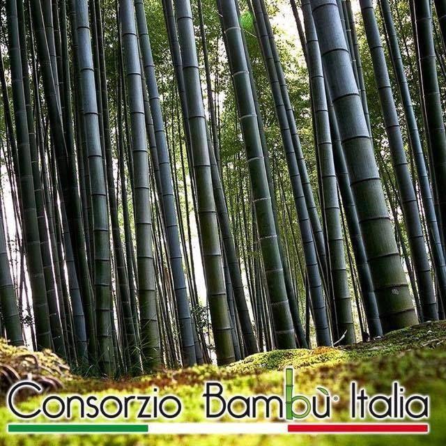 Differenziare le proprie colture, per resistere meglio nei momenti di crisi, significa anche garantirsi sempre maggiori opportunità di guadagno! #bambù #italiano #onlymoso #consorziobambùitalia