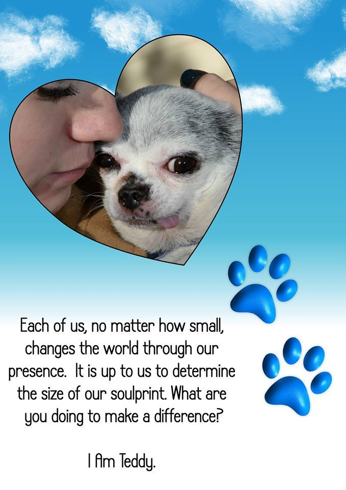 Pin By Debra Anderson On Chihuahua Rescue Dogs Puppy Mills