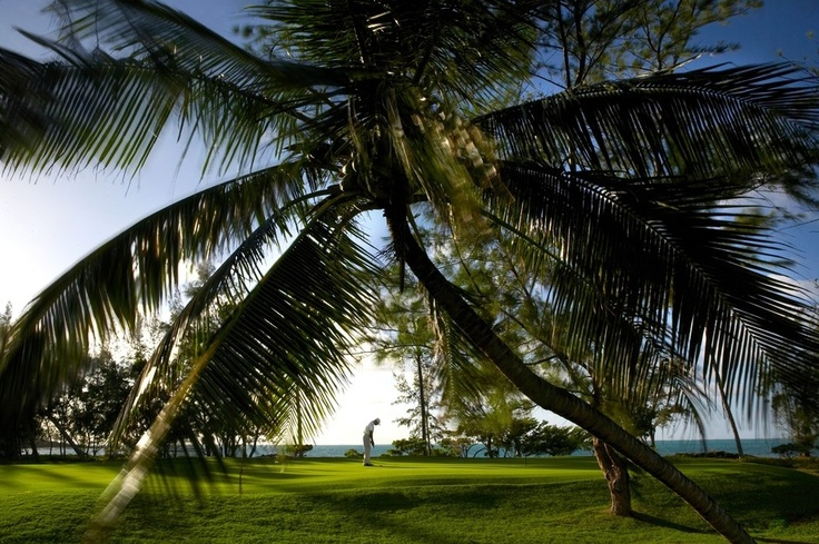 Under the shade of the palm trees and lit by golden sunlight, enjoy a round of golf by the Indian Ocean at Le Touessrok #mauritius #indianocean #sunlight #warmth