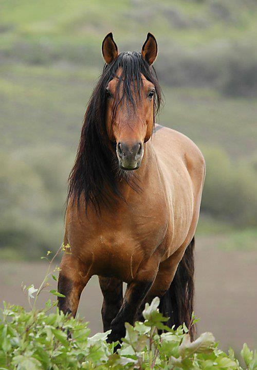 70 besten Wild Mustang...